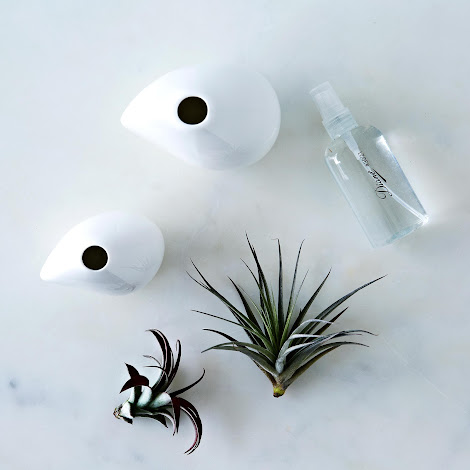 Airplant Vase Set