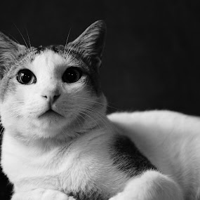by Calculating Light - Animals - Cats Portraits