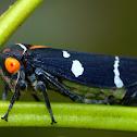 Green Gum Leafhopper