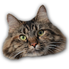 Cat Box icon