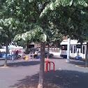 Tilleuil tree
