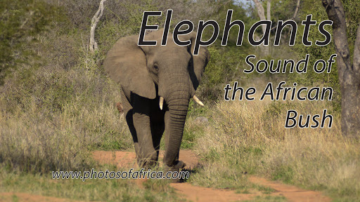 Sounds of the African Bushveld