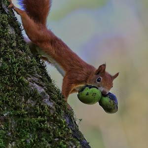 veverica.jpg