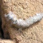 Caterpillar Unknown