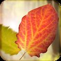 Falling Leaves 3D Wallpaper