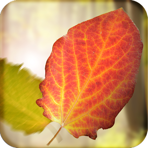 Falling Leaves Wallpaper Lite LOGO-APP點子