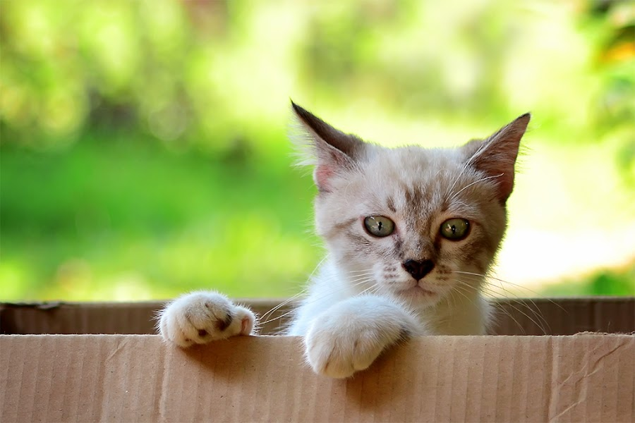 R by Sandi Nopri yanto - Animals - Cats Kittens