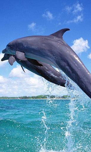 Дельфины Живые Обои