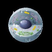 Biology Forums Blog