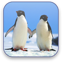 Penguins Free Video Wallpaper icon