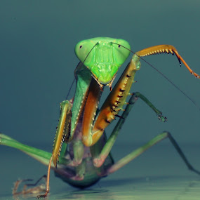 say hello by Gilang Franasia - Animals Insects & Spiders