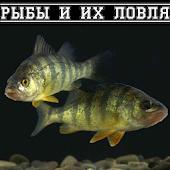Рыбы и их ловля