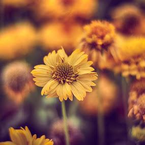 Flowers are Happiness by Abid Malik - Flowers Single Flower ( malixography, dubai, flowers )