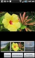 Screenshot of Kauai Flowers