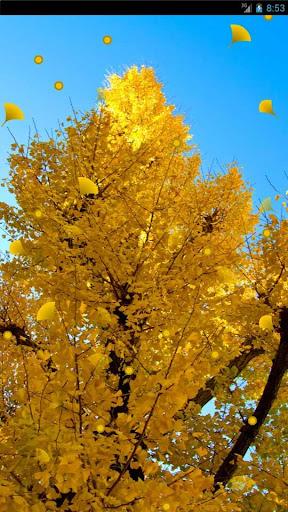 秋の縁側 -秋のライブ壁紙-