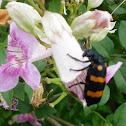 Blister Bee