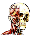 Flash Anatomy Muscles icon