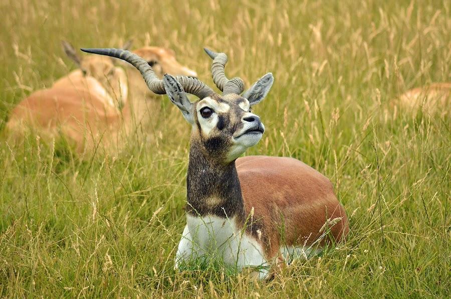 by Kate Bird - Animals Other Mammals