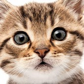 Kittens - photos and images
