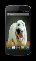 Screenshot of Labrador Licks Screen LWP