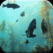Aquarium HD Live Wallpaper Android APK Download Free By Ezzardel
