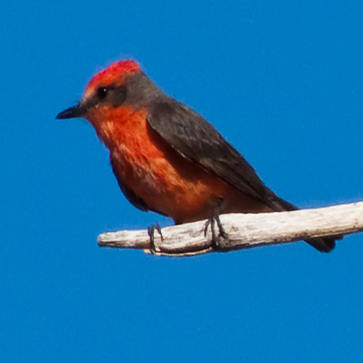 Exotic Bird Breeds Game