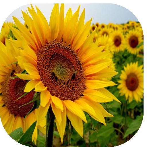 Energias Positivas Plantas 生活 App LOGO-硬是要APP