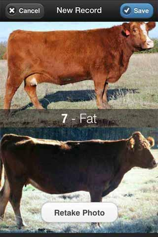 Beef Cow BCS - screenshot