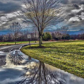 After the Rain by Mona Marie Hess - Landscapes Weather ( clouds, water, reflection, sky, trees, rain )