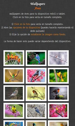 Fondos de pantalla de Aves