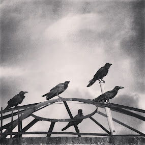 by Shiful Riyadh - Black & White Abstract ( bird, abstract, instagram, black & white, crow,  )