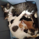 Babies with moms