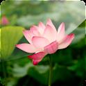 3D Lotus logo