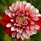 DSCN8865l.jpg