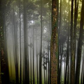 Jungle safari 1 by Mahul Mukherjee - Uncategorized All Uncategorized ( colour, tree, jungle, forest, photo, photography )