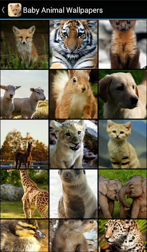 Baby Animal Wallpapers