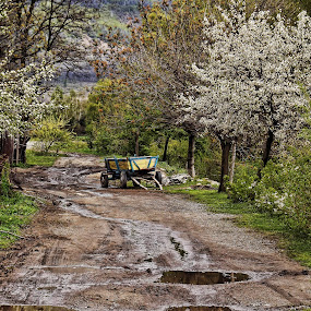 Summer, almost by Ines Raycheva - Landscapes Prairies, Meadows & Fields ( rainy, way, cart, almost, mud, sunny, path, summer, trees, horse cart, puddle, dirt, flowers, bulgaria,  )