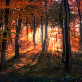 Autumn Sunrise Sunburst by Ceri Jones - Landscapes Forests ( autumn, trees, forest, woodland, woods )