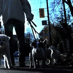 it's a dogs life by David Chu - Animals - Dogs Puppies ( @ go4david @chu @toronto @2013 @cbcnews )