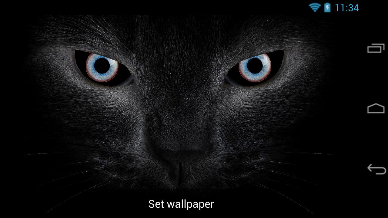Cats Eyes Trivia