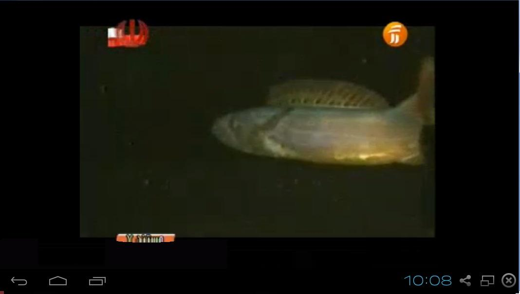 Live TV Iran - Iranian TV - screenshot