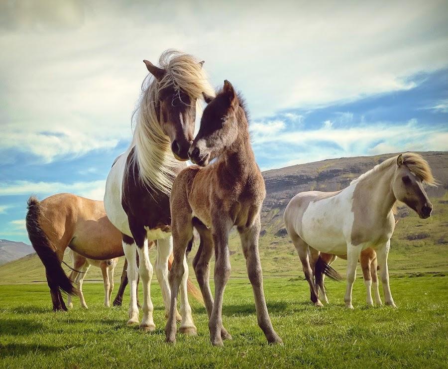 Mother & Child by Kristján Karlsson - Animals Horses