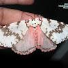 Pink Gypsy Moth