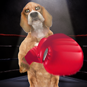 Boxing Dog Live Wallpaper