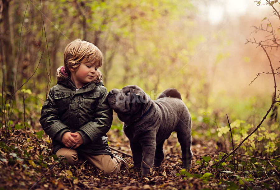 Best Friends by Claire Conybeare - Chinchilla Photography - Babies & Children Toddlers ( love, friends, sweet, shar pei, little boy, mans best friend, puppy, cute, toddler, boy )