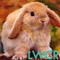 conejo Live Wallpaper icon