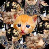 Kitten Faces Pro