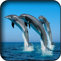 Dolphins wallpapers icon
