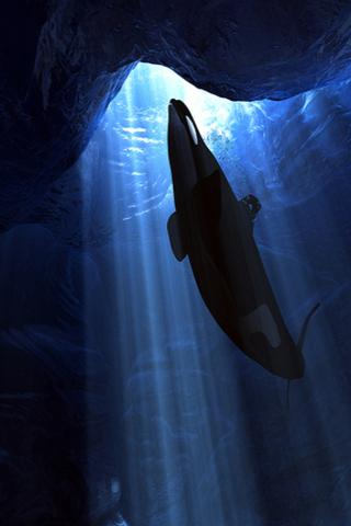 Orca wallpapers hd android apps on google play orca wallpapers hd screenshot altavistaventures Image collections