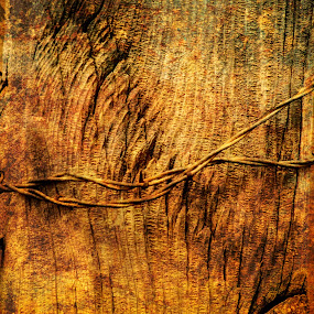 Fence Post by Ron Pierce - Artistic Objects Other Objects ( color, artistic, object, rustic, country )